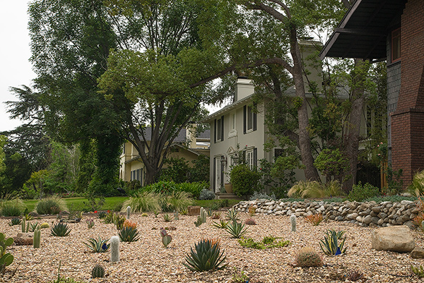 A Pasadena cactus garden - note the grassy green lawn next door, however.