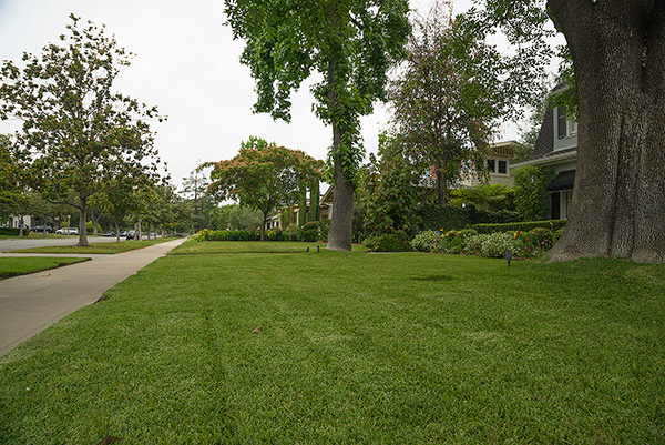 A verdant green pasadena lawn (taken on a rare cloudy day).