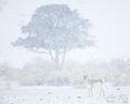 Snowglobe print