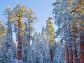 Winter's Warmth print