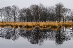 Kampina Reflection, Oisterwijk, the Netherlands, nature's mirror, dutch,