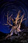 Bristlecone Pine Light Painting and Star Trails, White Mountains, California, essence of time