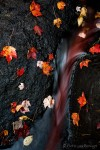 Fall Leaves and Stream, Adirondacks, New York, nature's blood, new england, autumn, red, leaves