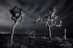 Joshua Tree Light Painting at Night, Joshua Tree National Park, California, lost spirits,