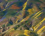 Temblor Range Flowers Aerial, Carrizo Plains National Monument, California, monet's palette, wildflower, 2010, spring