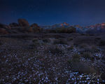 Flowers and Stars, Alabama Hills, California