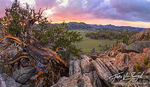 Bristlecone Pines, Sage Valley, White Mountains