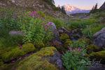 Summer Flowers, Cascades, Washington