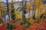 Cascades, Autumn, Forest