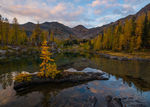 Larch, Autumn, Cascades