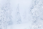 Frosted Ghost Trees, Mount Seymour, British Columbia