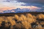 Grasses, Patagonia, Argentina