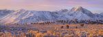 Sierra Nevada Panorama, Juniper Desert, Sunshine
