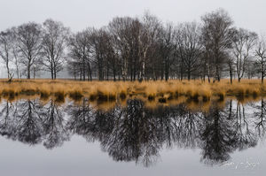 Kampina Reflection, Oisterwijk, the Netherlands, nature's mirror, dutch