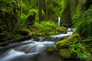 Beautiful Mossy Forest Waterfall, Columbia River Gorge, Oregon, rivendell,