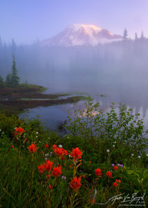 Mt Rainier Wildflowers and Mist, Mount Rainier National Park, Washington, painting the mountains mystery
