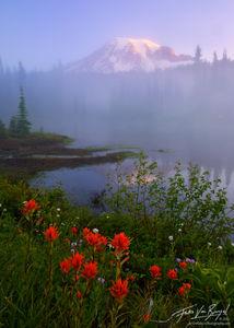 Mt Rainier Wildflowers and Mist, Mount Rainier National Park, Washington, painting the mountains mystery