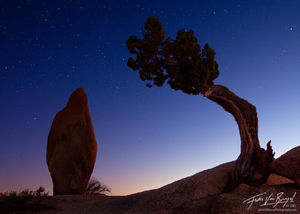 Juniper and Rock with Stars at Night, Joshua Tree National Park, California, a cosmic balance