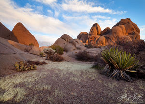 Desert Zen Garden, Joshua Tree National Park, California,