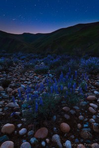 Lupine and Kings River with Stars, Foothills, California, spring, sierra, cosmic patio