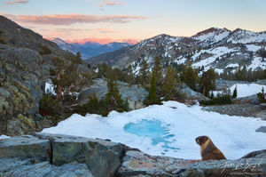 Marmot and Mountains, Ansel Adams Wilderness, California, marmot's view, minarets, Marmota flaviventris