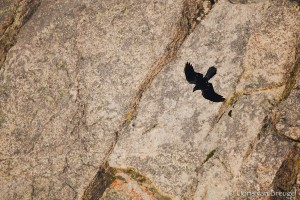 Stone Spirit, Rocky Mountains National Park, Colorado, mount evans, raven