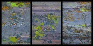 Petrified Pollock Lichen, Vasquez Rocks County Park, California