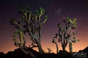 Joshua Trees and Milky Way Light Painting, Antelope Valley, California, another world