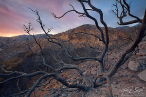 Wildfire Wasteland, San Gabriel Mountains, California, beauty that was, angeles national forest, desolate