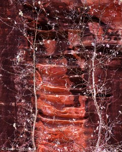 Red Rock Skeletons, Zion National Park, Utah, red rock, sandstone, canyon