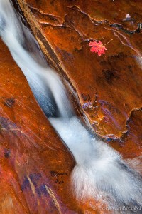 Maple Leaf and Subway Crack, Zion National Park, Utah, red refreshment, water, left fork