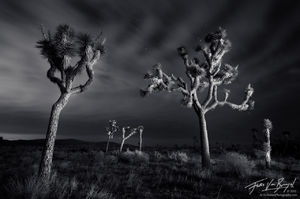 Joshua Tree Light Painting at Night, Joshua Tree National Park, California, lost spirits