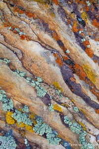 Colorful Lichen, BLM land, Utah