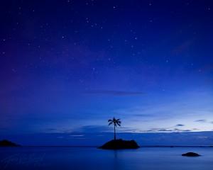 Coconut Tree, Tutuila, American Samoa