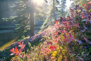 Autumn Colors, Blueberry Bushes, Cascades