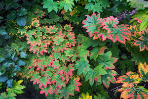 Autumn Color, Leaves, Washington