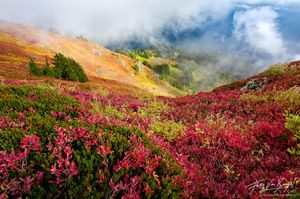 Cascade Berries and Fall Color, North Cascades, Washington