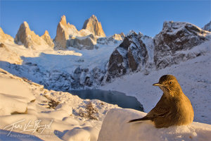 Bird, Fitz Roy, Winter in Patagonia