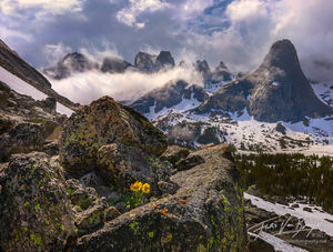 Cirque of Towers, Wind River Range, Flowers