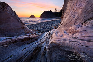 Driftwood on Olympic Coastline, Rialto Beach, Washington