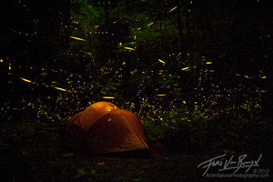 Camping with Fireflies, Smoky Mountains, Tennessee