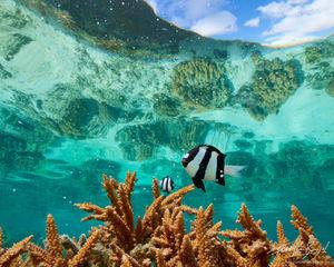 Tropical Fish in Coral Reef, Ofu, American Samoa