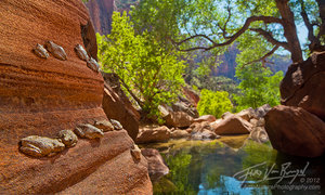 Canyon Tree Frogs in Zion National Park, Pine Creek Canyon, Southwest