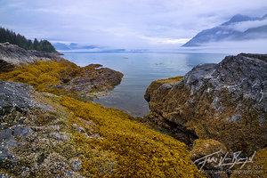 Golden Seaweed at Lowtide, Glacier Bay, Alaska