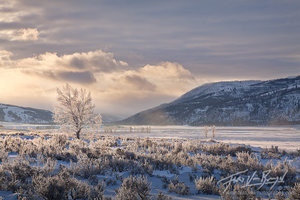Frosted Trees, Lamar Valley, Yellowstone National Park