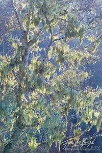 Lichen Sunlight, Van Damme State Park, California