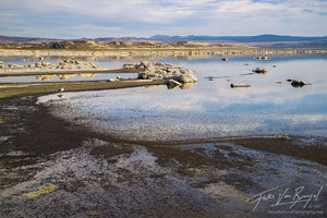 mono lake, alkali flies, seagull