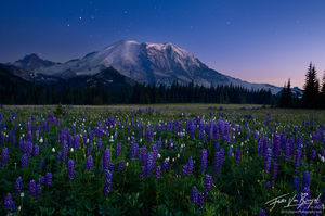Mount Rainier with Spring Lupine Flowers and Twilight Stars, Mount Rainer National Park, Washington