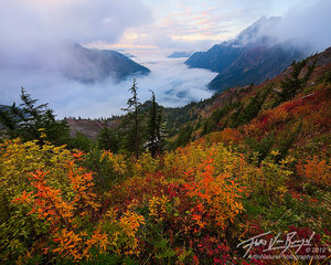 North Cascades Autumn Foliage, Mist Valley, Washington