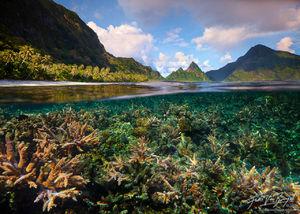 Tropical Coral Reef, Ofu, American Samoa, staghorn coral, acropora